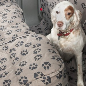 pet canine automotive seat covers